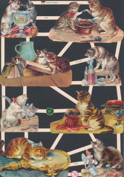 Poezieplaatjes poezen vintage (Locatie: MP100)
