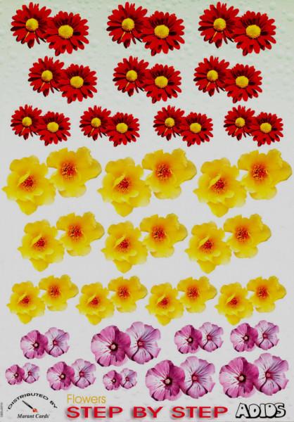 Adios knipvel bloemen SBSu0010 (Locatie: 4407)