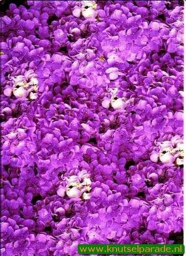 Perkament vellum hortensia paars 61752 (Locatie: 4412)