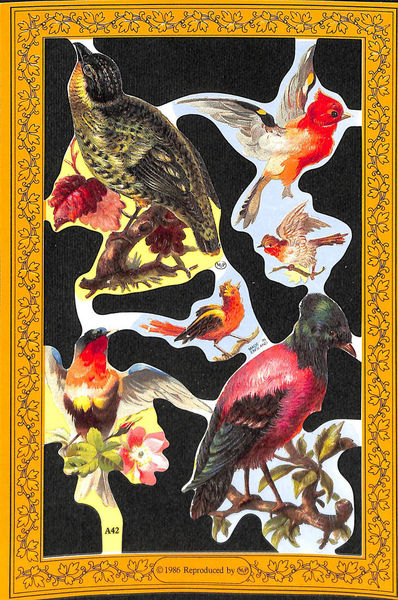 Poezieplaatje Vogels MLPA42 (Locatie: MP064)