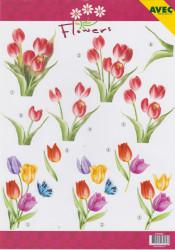 Avec knipvel bloemen 6000063 (Locatie: 1416)
