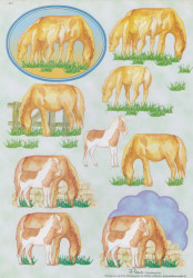 Knipvel paarden E15 (Locatie: 6231)