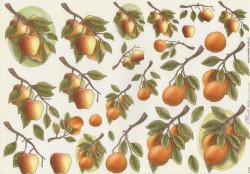 Mireille knipvel fruit E176 (Locatie: 2867)