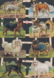 Poezieplaatjes honden vintage (Locatie: MP098)