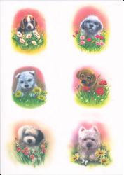 Vellum honden 62567 (Locatie: 2713)