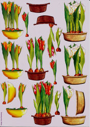 Hans Elsenburg knipvel tulpen (Locatie: 1405)