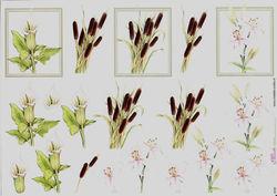 Mireille knipvel bloemen E509 (Locatie: 6734)