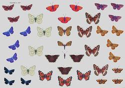 Wekabo knipvel vlinders 507 (Locatie: 0629)
