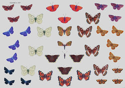 Wekabo knipvel vlinders 507 (Locatie: 629)