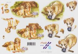Nouvelle knipvel honden 821557 (Locatie: 2761)