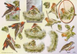 TBZ knipvel vogels 504131 (Locatie: 1514)