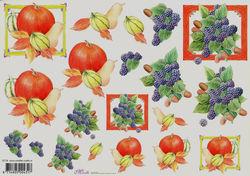 Mireille knipvel fruit E718 (Locatie: 2383)