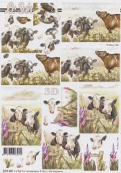 Le Suh knipvel koeien 8215496 (Locatie: 6005)