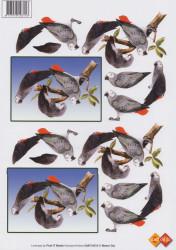 Card Deco knipvel papegaai MAT10015 (Locatie: 6310)