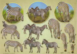TBZ knipvel zebra 504320 (Locatie: 0231)