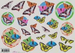 Mireille knipvel vlinders E722 (Locatie: 2384)