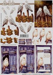 Le Suh knipvel uilen 4169878 (Locatie: 0611)