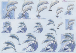Mireille knipvel dolfijn E543 (Locatie: 1208)