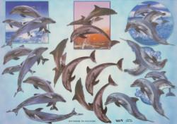 TBZ knipvel dolfijn 504128 (Locatie: 0536)