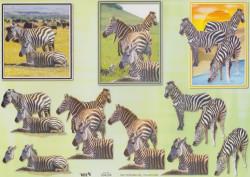 TBZ knipvel zebra 504204 (Locatie: 0506)
