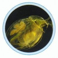 Set lame microorganisme in picatura de apa - 10 lame
