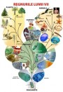 Planșe didactice genetică