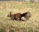 Hranitoare pentru veverite