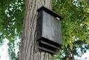 Adapost pentru lilieci