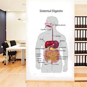 Sticker perete Sistemul Digestiv