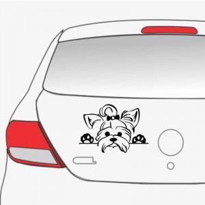 Sticker auto Yorkie 2