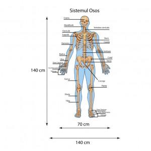 Sticker perete Sistemul Osos