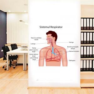 Sticker perete Sistemul Respirator