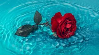Trandafir criogenat: ce este, cat tine si cui i-l poti oferi