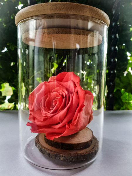 Trandafir criogenat XL, cupola decorativa