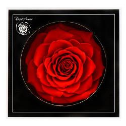 Trandafir criogenat XXL - Rainbow
