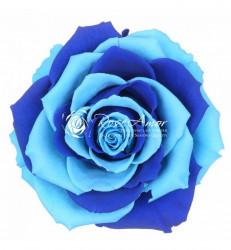 Trandafir criogenat XXL - Rainbow blue