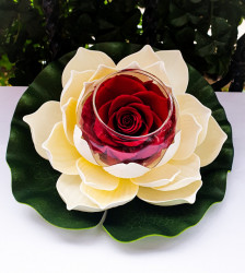 Trandafir criogenat XL, nufar decorativ