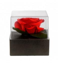 Trandafir criogenat XL, Rosu - Giftbox