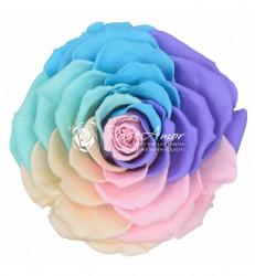 Trandafir criogenat XXL - Rainbow pink