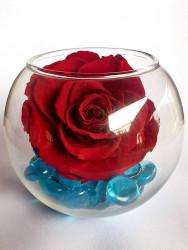 Trandafir criogenat XL