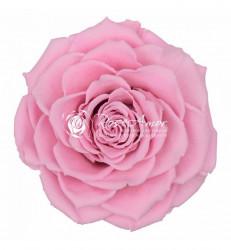 Trandafir criogenat XXL - Roz