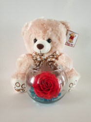 Urs de plus + trandafir criogenat XXL