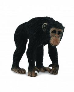 Cimpanzeu Femela - Collecta
