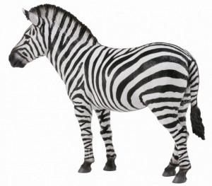 Zebra - Collecta