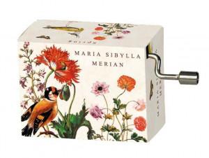 Flasneta Maria Sibylla Merian (pasari), Vivaldi Spring