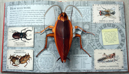 Bugs Pop-Up Journey