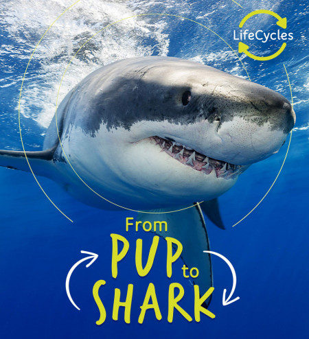 Lifecycles: Pup To Shark