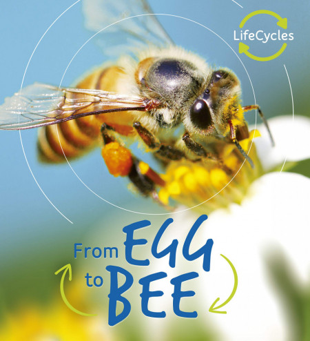 Lifecycles: Egg to Bee
