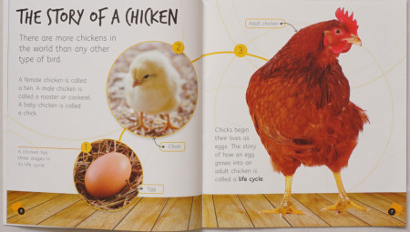 Lifecycles: Egg to Chicken