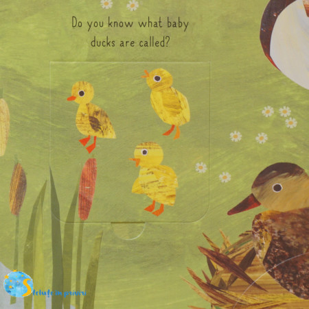 Bird House: A lift-the-flap book of discovery